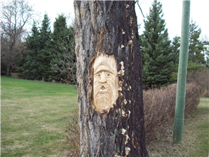 Carved Face on Maple by Alan Booth
